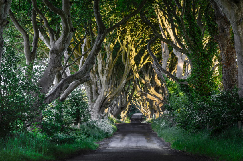 external image Northern-Ireland-Valley-Dark-Hedges.jpg